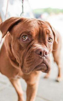 Acupuntura Cães e Gatos Ribeirão Pires - Acupuntura para Animais