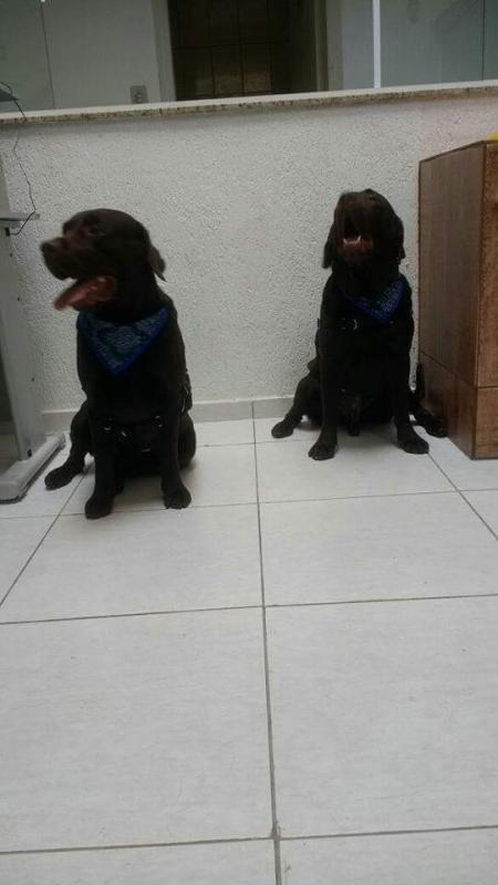Acupuntura para Animais Santo André - Acupuntura Cães Coluna