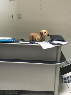 Clínica Veterinária para Cães Santo André - Clínica Veterinária Cães e Gatos