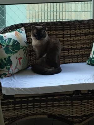 Onde Encontrar Clínica Veterinária para Gatos São Bernardo do Campo - Clínica Pet Shop
