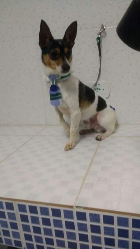 Onde Encontrar Vacina Veterinária V8 Diadema - Vacinação para Cães e Gatos