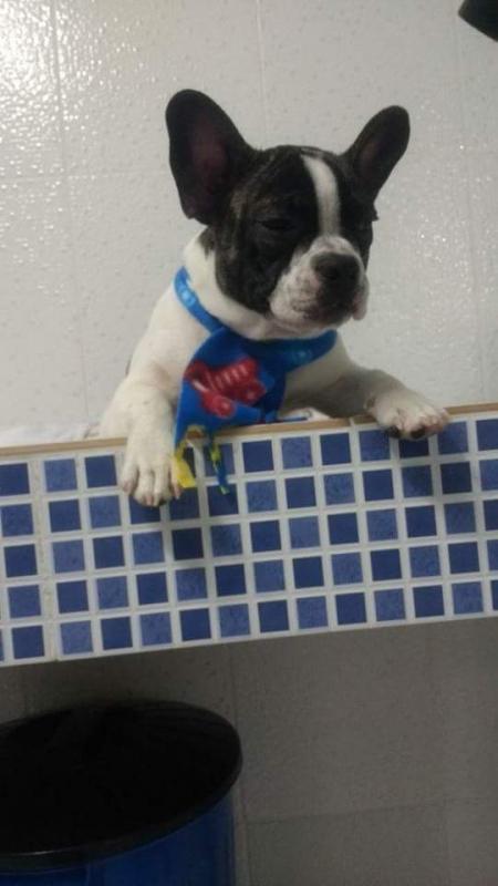 Onde Encontrar Vacinação para Animais de Estimação São Bernardo do Campo - Vacinação para Cachorro Filhote