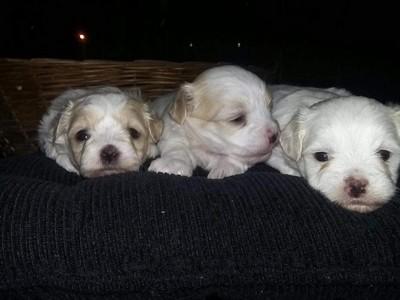 Onde Encontrar Vacinação para Cachorro Filhote Mauá - Vacinação para Cães