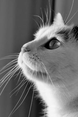 Onde Encontrar Vacinar Animais contra Raiva Mooca - Vacinação para Cães e Gatos