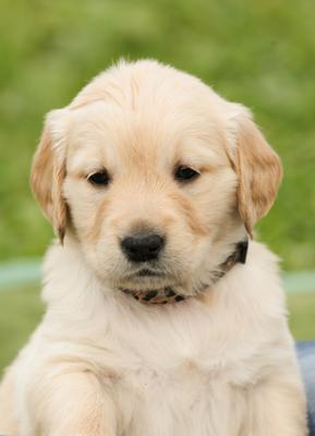Onde Encontro Acupuntura Cães e Gatos Itaquera - Acupuntura para Animais