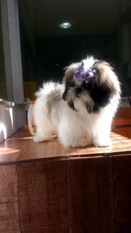 Onde Encontro Consulta Veterinária para Cães e Gatos Santo André - Consulta Veterinária para Animais de Estimação