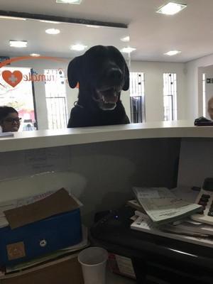 Onde Encontro Hospital 24 Horas para Cachorro Tatuapé - Hospital Clínico Veterinário