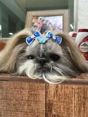 Onde Encontro Vacinação para Cães e Gatos Itaquera - Vacinação para Animais de Estimação