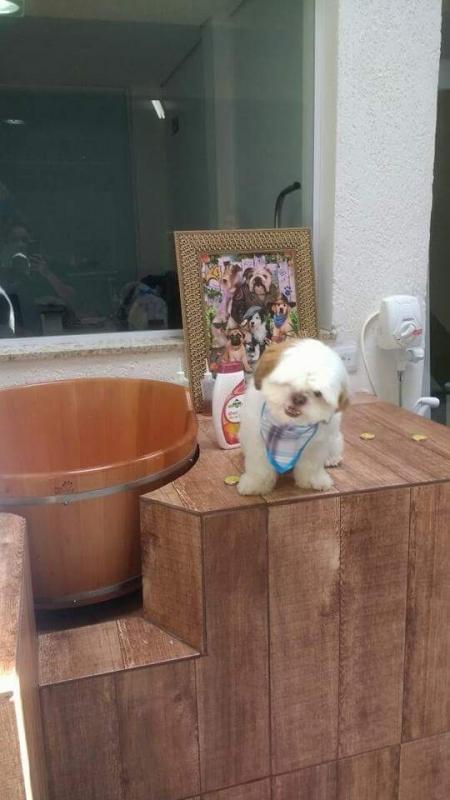 Quanto Custa Acupuntura Cães Animais Tatuapé - Acupuntura em Cães com Hernia de Disco
