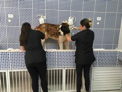 Quanto Custa Consulta Veterinária para Animais Idosos Itaquera - Raio X Veterinário