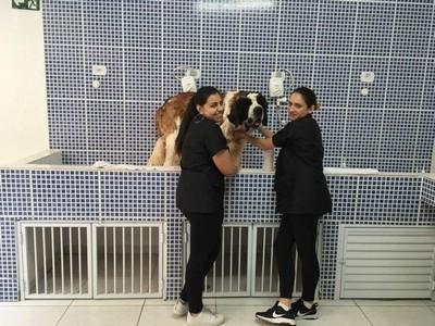 Quanto Custa Consulta Veterinária para Cães e Gatos Santo André - Raio X Veterinário
