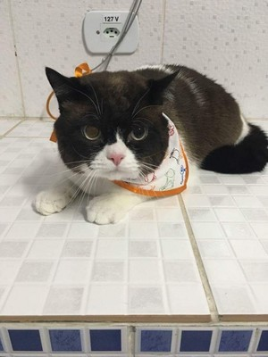 Quanto Custa Internação para Gatos Rio Grande da Serra - Internação para Animais Doentes