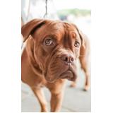 acupuntura cães e gatos Mauá