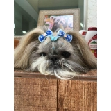 acupuntura de cães Santo André
