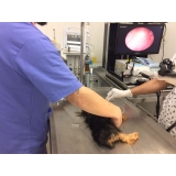 acupuntura em cães com hernia de disco Santo André