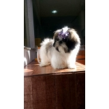 acupuntura cães coluna