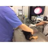 clínica veterinária cães e gatos Santo André