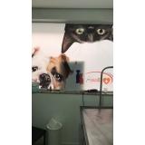 clínica veterinária dermatologia Diadema