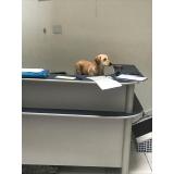clínica veterinária para cães Santo André