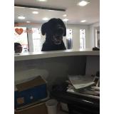 clínica veterinária para cães