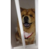 consulta veterinária cachorro São Caetano do Sul