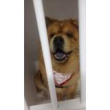 consulta veterinária cachorro Mooca