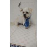 consulta veterinária cães Rio Grande da Serra