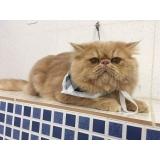 consulta veterinária para animais de estimação Diadema