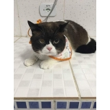 consulta veterinária para cães e gatos Vila Prudente