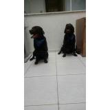 consulta veterinária cachorro