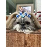 consulta veterinária cães
