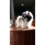 internação para cães Itaquera