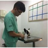 oftalmologia veterinária São Caetano do Sul