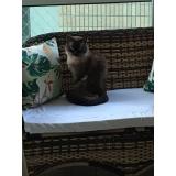onde encontrar clínica veterinária para gatos Santo André