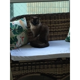 onde encontrar clínica veterinária para gatos Vila Prudente