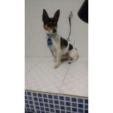 onde encontrar vacinas para animais de estimação São Bernardo do Campo