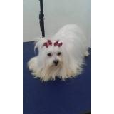 onde encontro consulta veterinária animais de estimação São Caetano do Sul