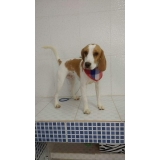 onde encontro consulta veterinária cachorro Santo André
