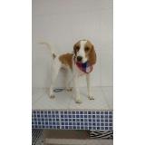onde encontro consulta veterinária cachorro Mooca