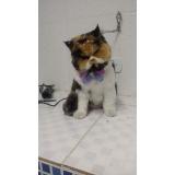 onde encontro consulta veterinário gato Ribeirão Pires