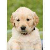 onde encontro vacinação para cachorro filhote Santo André