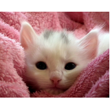 onde encontro vacinação para gatos Itaquera