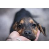 onde encontro vacinar animais contra raiva São Bernardo do Campo