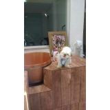 quanto custa acupuntura cães animais Mauá