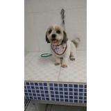 quanto custa consulta veterinária cães Santo André