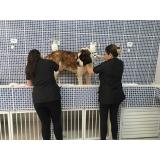 quanto custa consulta veterinária para animais idosos Mauá