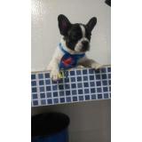 quanto custa internação para cães Itaquera