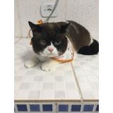 quanto custa internação para gatos Diadema