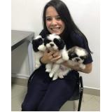 vacinação para cachorro filhote Mooca