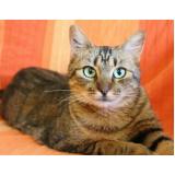 vacinação para gatos Mooca
